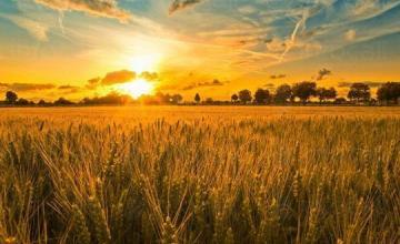 Производство селскостопанска продукция в Елхово - Селскостопанска продукция Елхово