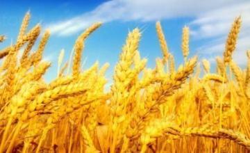 Производство селскостопанска продукция в Склаве-Сандански