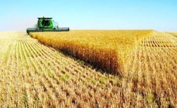 Производство селскостопанска продукция в Стражица - Мони 99 ЕООД