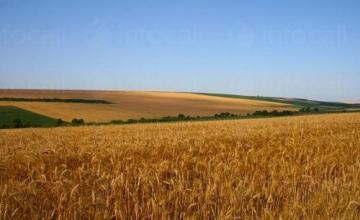 Производство селскостопанска продукция в Завет и Разград - ССОЗ Клас ООД