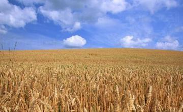 Производство селскостопанска продукция вПървомай - Селскостопанска продукция Първомай