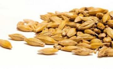 Производство семена в Разград - Земеделска продукция Разград