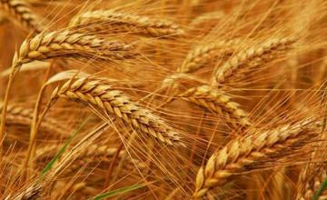 Производство земеделска продукция в Костиево-Пловдив - Земеделска кооперация-област Пловдив