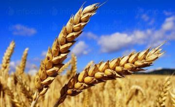 Производство земеделска продукция в община Поморие, област Бургас - Земеделска кооперация Бата