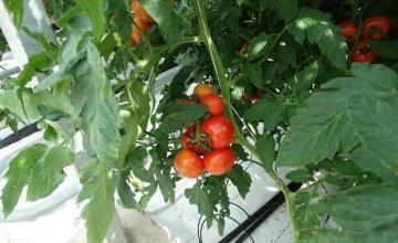Растениевъдство в град Мездра - Озирис Цветан Йорданов ЕТ