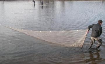 Развъждане и отглеждане на риба в Червен бряг