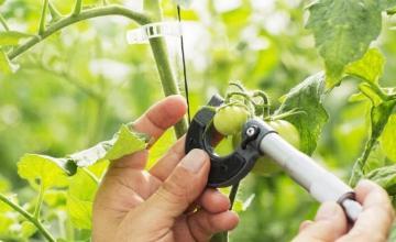 Реализация на селскостопанска продукция в Долни Дъбник - Земеделски производител Долни Дъбник