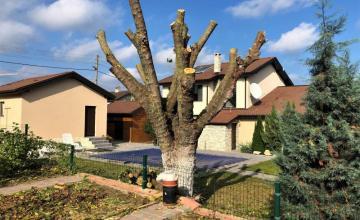 Рязане на дървета във Варна - Пеърс ЕООД