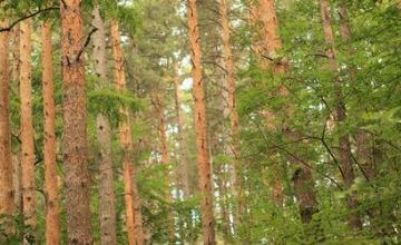 Сертифициране на гори в София - Сертификация дърводобив