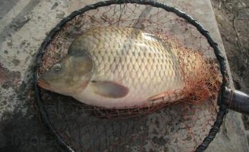 Спортен риболов в Червен бряг - Ценков 64 Рибарници ЕТ