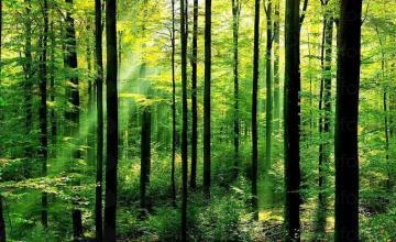 Стопанисване и охрана на гори в област Търговище