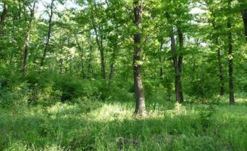 Стопанисване на гори в Смядово-Шумен - Дърводобив Смядово