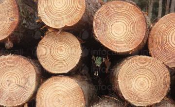 Търговия с дърва и дървен материал в Сандански
