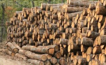 Търговия с дървен материал в Омуртаг - Търговище - Дървен материал Омуртаг