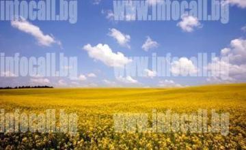 Търговия селскостопанска продукция в Езерче-Цар Калоян - Терас 3 ООД