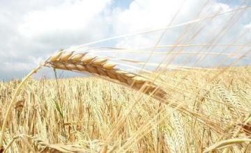 Търговия селскостопанска продукция в Недан-Павликени - ЗКПУ Златен Клас