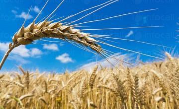 Търговия селскостопанска продукция в Силистра - Агровин ЕООД