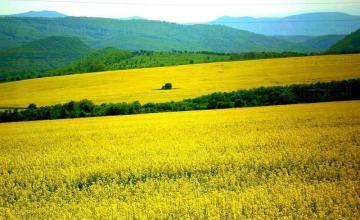 Търговия селскостопанска продукция в Стара Загора - Агрекс  ЕООД