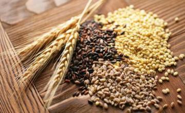 Търговия селскостопанска продукция в Търговище - Агровариант ЕООД