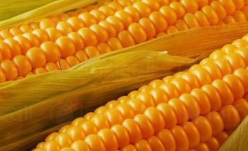 Търговия земеделска продукция в Студено Буче-Монтана - КП Агротруд Инвест