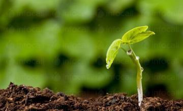 Цени за вземане, изпитване и анализ на почвени проби в Пловдив