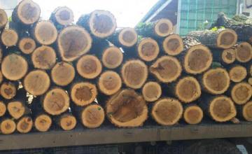 Транспорт дърва, въглища, брикети Плевен - Топлина Ангел Тодоров ЕТ