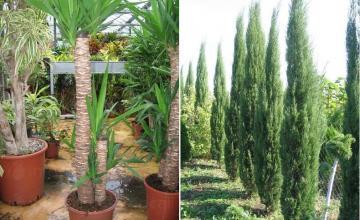 Тревисти, перенни и многогодишни растения в Бургас и Айтос - Цветя Бургас