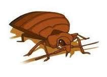 Унищожаване на хлебарки в Пловдив