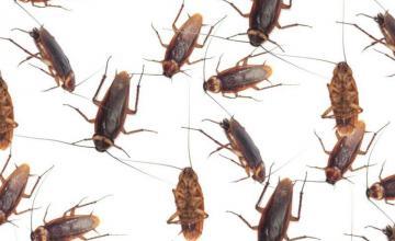 Унищожаване на хлебарки Варна
