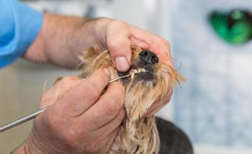 Ветеринарен стоматолог в град Поморие