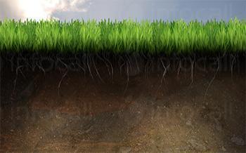 Внос и дистрибуция на абсорбенти селско и горско стопанство в София-Оборище - Препарати за растителна защита София