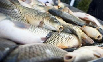 Внос и дистрибуция на рибни продукти в Бургас - Атлантик АД