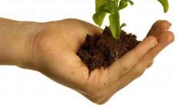 Залесяване в Стойките-Смолян