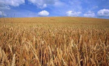 Зърнопреработка в Разград - Земеделска продукция Разград