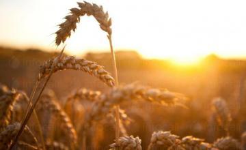 Зърнопроизводство в община Поморие, област Бургас - Земеделска кооперация Бата