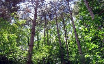 Защита на дървесни видове от вредители - Лесозащитна станция София