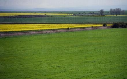 Арендуване земеделска земя в Хърлец-Козлодуй - ПТЗК Аугуста