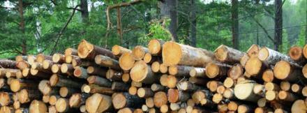Дърводобив и дървообработване в Казанлък - Дървен материал Казанлък