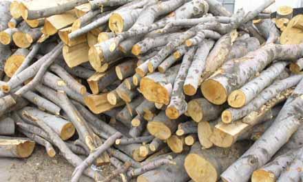 Дърводобив в Омуртаг-Търговище - Дървен материал Омуртаг