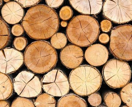 Дърводобив в Троян - НИван Трейд ЕООД