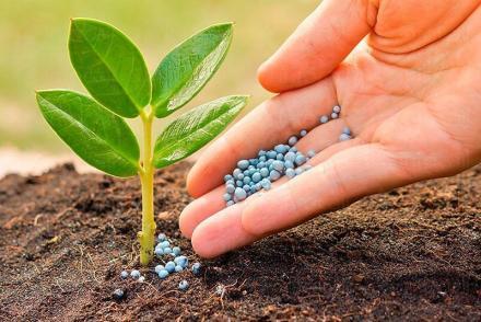 Дистрибуция и продажба на препарати за растителна защита в Кубрат, Русе и Глоджево - Земеделски услуги