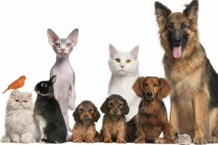 Дистрибуция на ветеринарномедицински препарати в Хасково - Алфафарм ООД