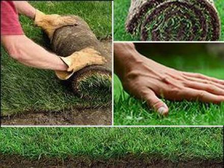 Изграждане зелени площи във Видин - Озеленяване Видин