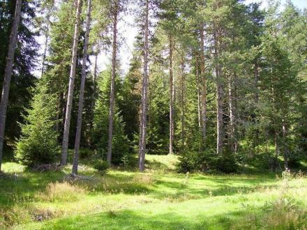 Изкупуване гори за сеч Варна - Плутон 69