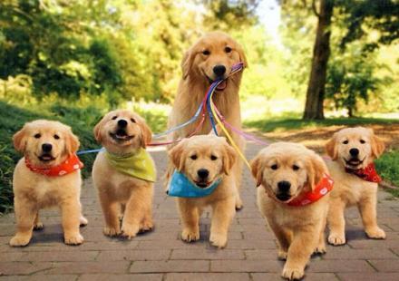 Изкуствено заплождане на кучета в Стара Загора - Ветеринарна клиника Стара Загора
