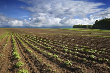 Комасация на земеделски земи в София - ТРИАДА 96 АД