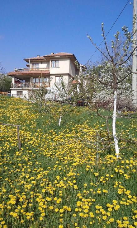 Настаняване в старчески дом в София-Бистрица - Червена роза