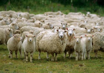Научноизследователска дейност в животновъдство и земеделие в Троян - Институт по планинско животновъдство и земеделие