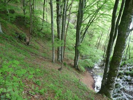 Отглеждане дървесни насаждения Чирпан - БИ ЛЕС