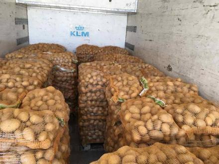 Отглеждане на картофи в Долни Чифлик-Варна - Ивмар Жекови ООД